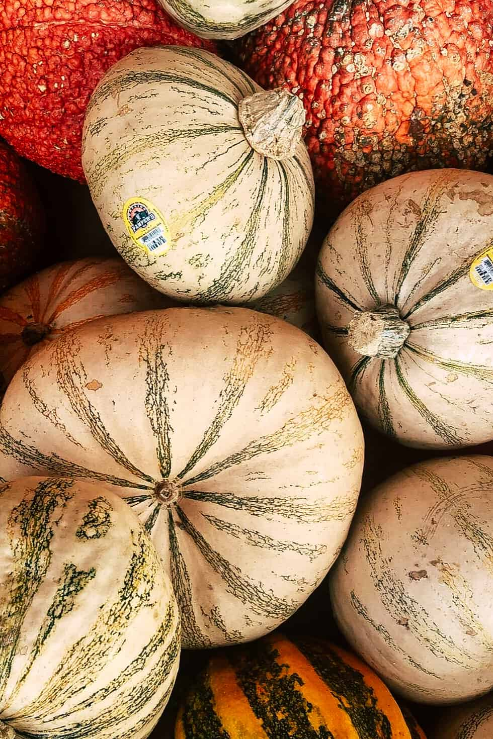Orange, white, and green striped pumpkins.