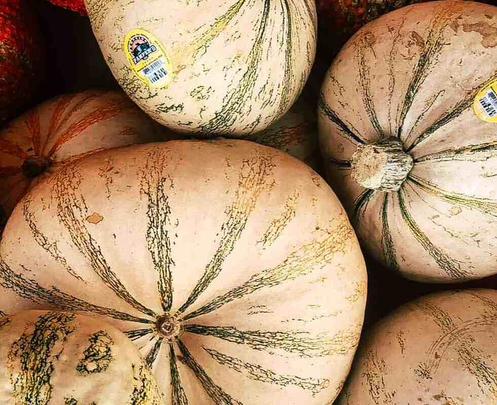 Orange, white, and green striped pumpkins.