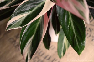 10 Stunning Houseplants That Are Safe for Cats & Dogs