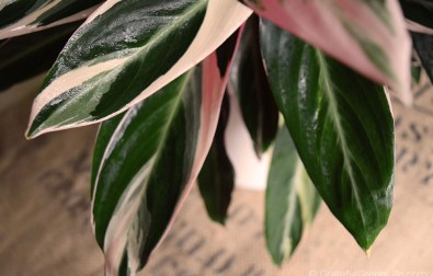 pet-friendly-houseplants