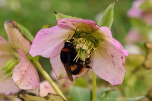 10 Helpful Herbs That Will Attract Pollinators into Your Garden