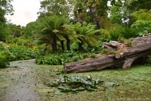 A Day Out At The Spectacular Abbotsbury Subtropical Gardens