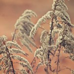If You Pull Up the Weeds…