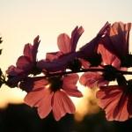 Gratefulness: A Source of Strength
