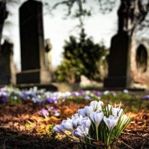 graveyard crocuses