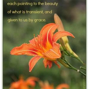 grief, gratitude, orange day lily, grace, beauty