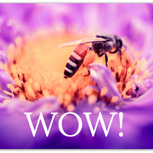 bee drinking from a purple flower