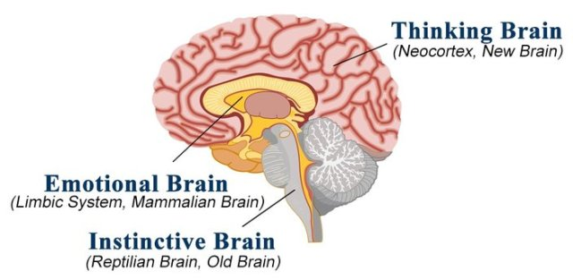 creierul reptilian