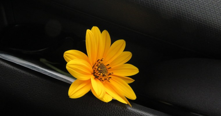 workshop di food photography… Pasticci in arrivo?