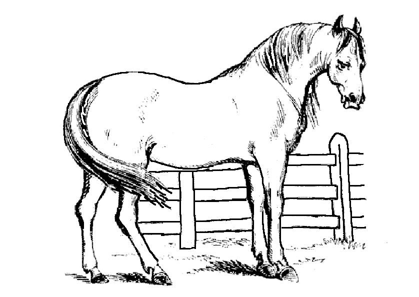 Gratis Malvorlagen Pferde - Ausmalbilder und Vorlagen