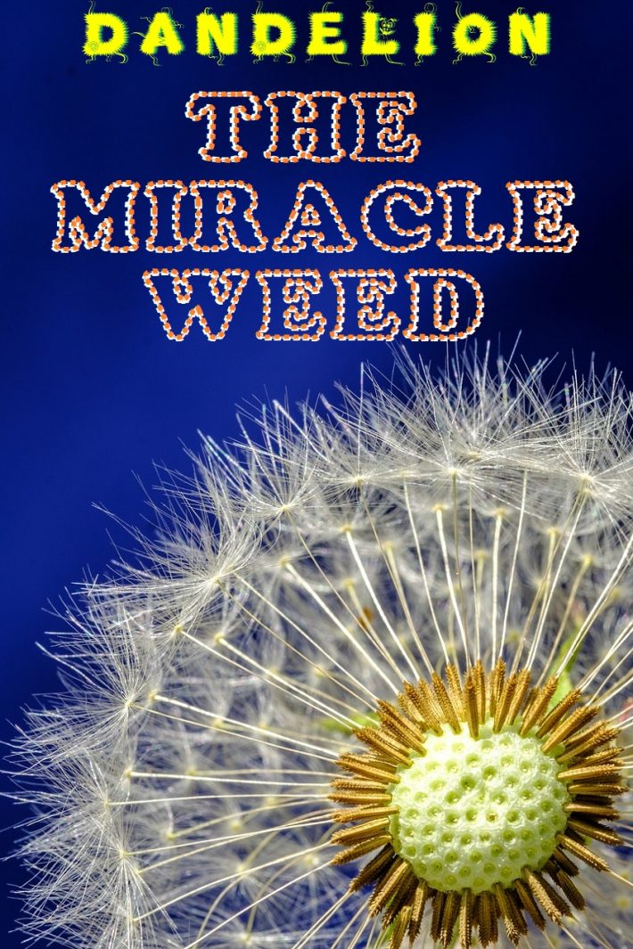 The Miracle Weed-DANDELION