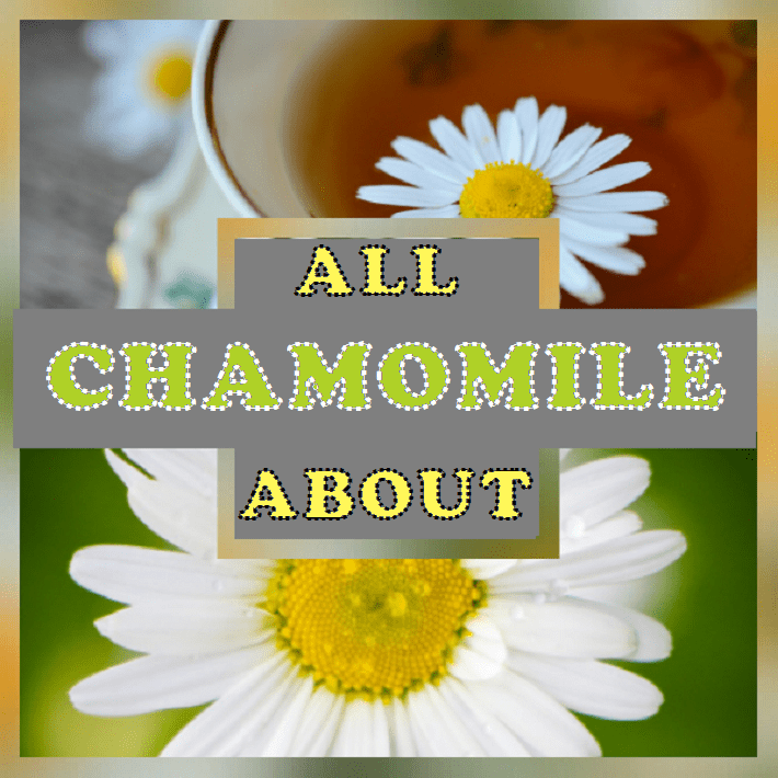 All About Chamomile