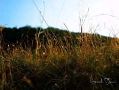 Colours_9