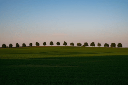 port perry trees