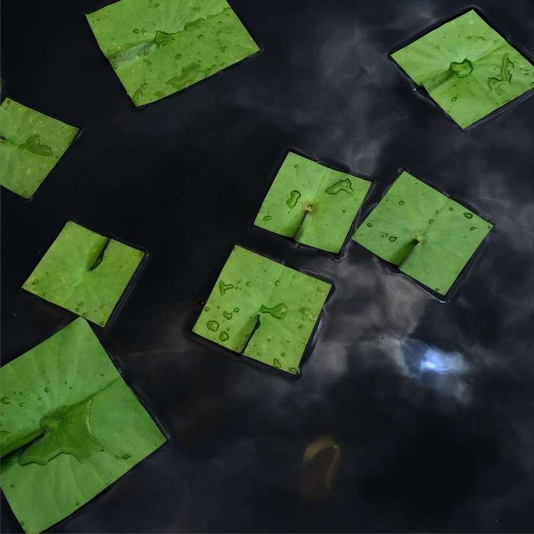 Bit Leaves by Baku Maeda (6)