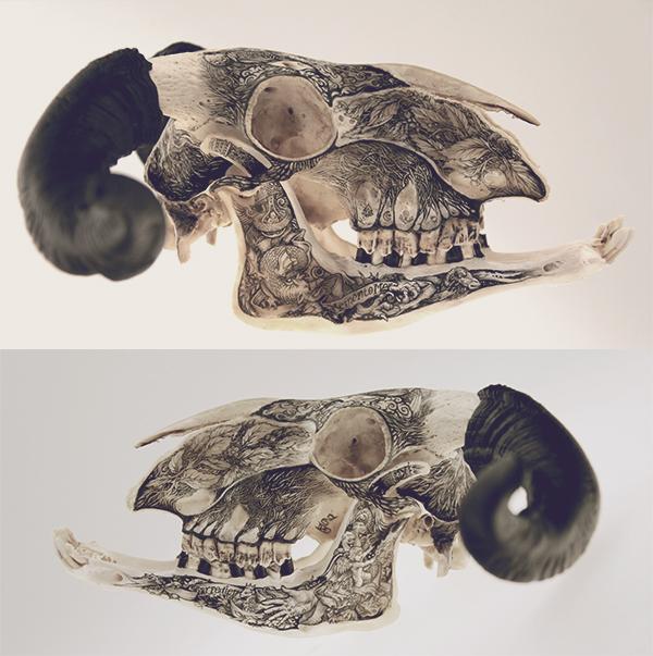 Illustrations on Skulls by DZO Olivier (5)