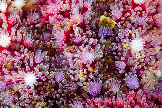 macro-shots-of-corals-by-alexander-semenov-6