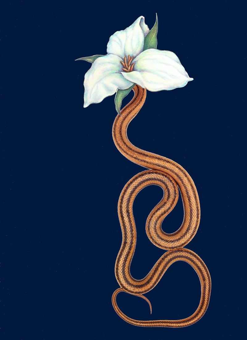 snake-flowers-by-annalynn-hammond-4