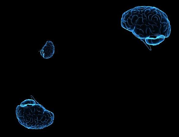 Boltzmann Brain Discovery ! (2/2)