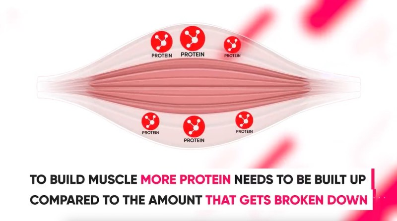 steroids-more-protein-built-than-broken-down