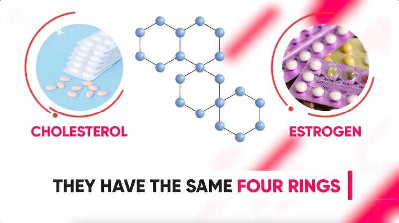 steroids-estrogen-cholesterol-same-4-ring-structure