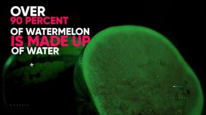 watermelon-made-from-over-90-percent-water-burns-belly-fat