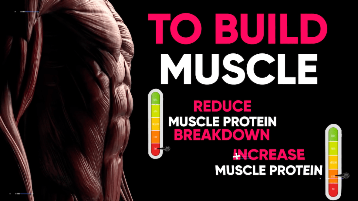 eat protein to build muscle