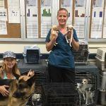 German Shepherd 21 Puppies Rescued From Living In Bronx Veteran S Suv