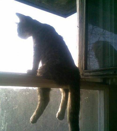 Cat sitting on window sill.