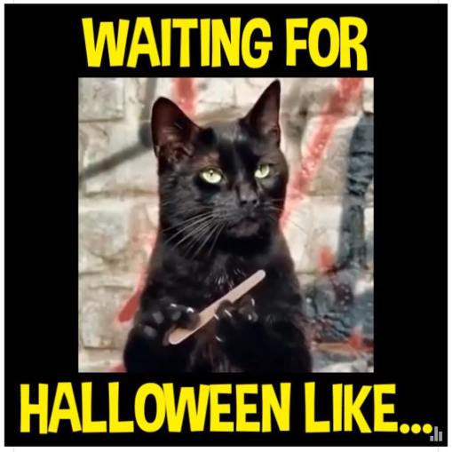 black_cat_halloween