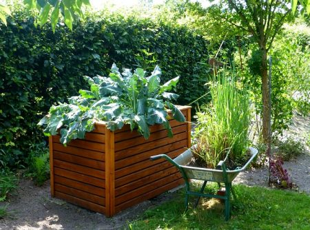 raised garden box made out of cedar wood with large green plants next to a wheelbarrow