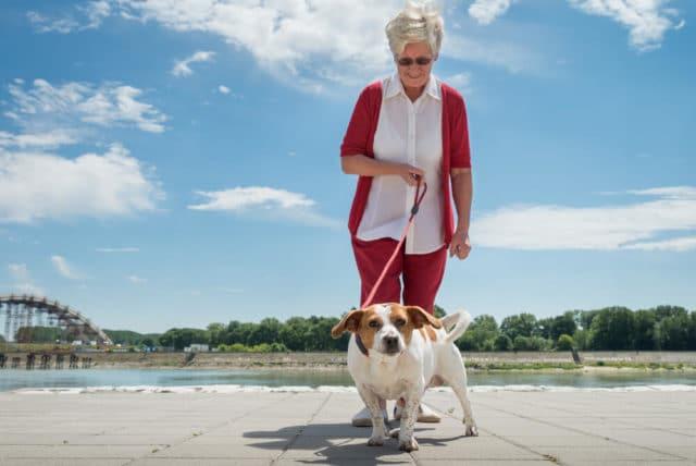 senior woman walking a dog as a job