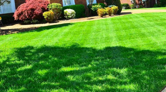 Six Steps to Renovating Your Lawn