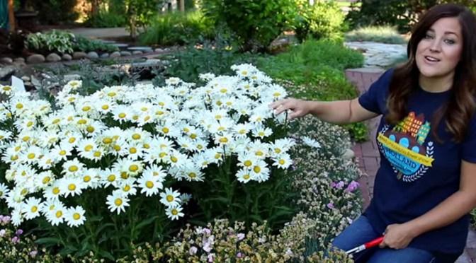 Trimming Back Perennials