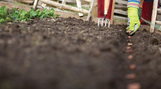 It's Time To Plan Your Spring Veggie Garden