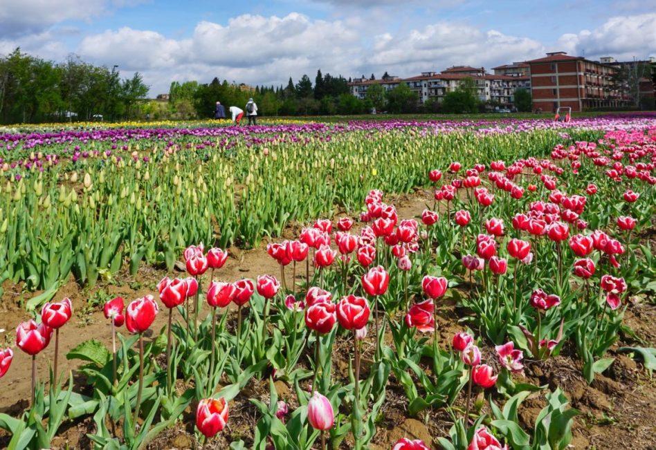 parque-tulipas