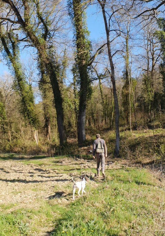 caçar-trufas