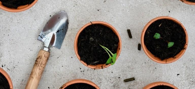 Mein Gartenjahr 2020: Anbaukalender April & das erste Umtopfen