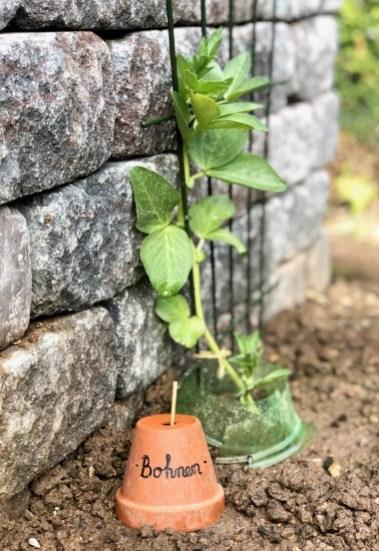 Mein Gartenjahr 2019: Anbaukalender Mai & der finale Auszug ins Freie