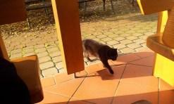 Cat on guard