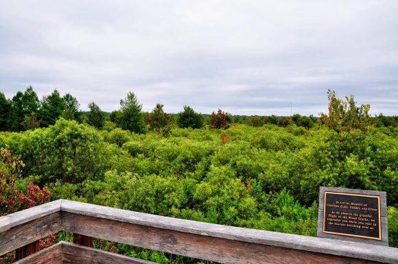 Florida Birdwatching: Corkscrew Swamp. observation platform