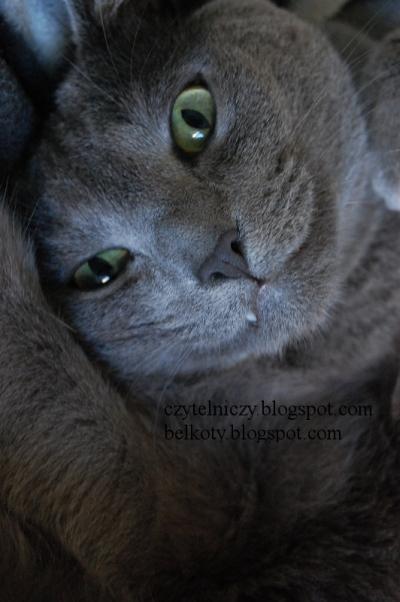 koty oczka1