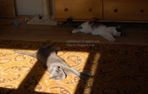 koty oczka6jpg