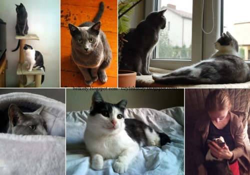 koty oczka8