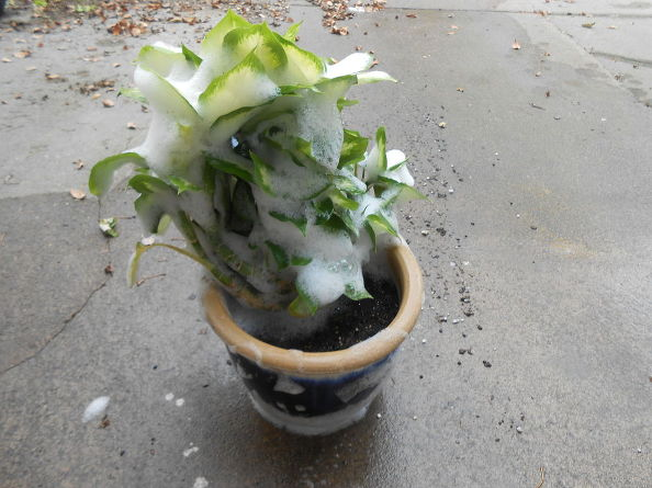 cleaning-tips-garden-plants-inside-bug-free-cleaning-tips-container-gardening-gardening (2)