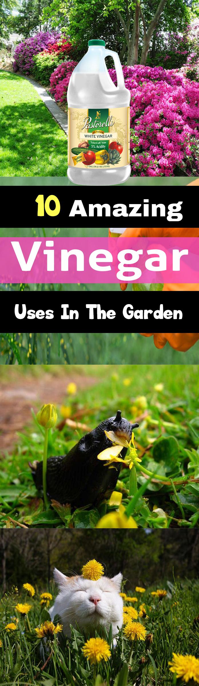 10 Amazing Vinegar Uses In The Garden Organic Gardening