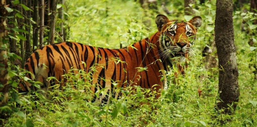 Chitwan 1 night 2 days Program - Chitwan National Park Safari