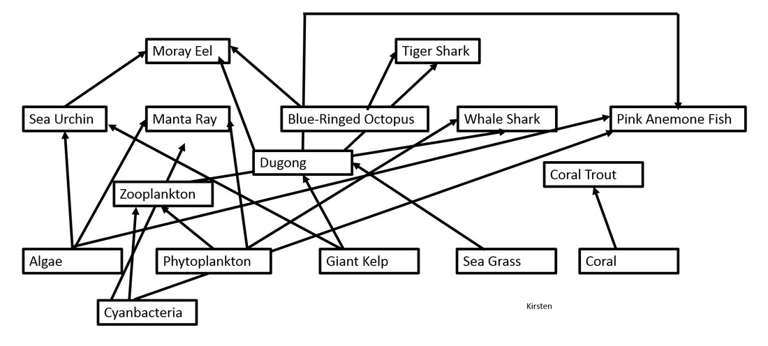 coral reef food chain diagram systems engineering v web great barrier