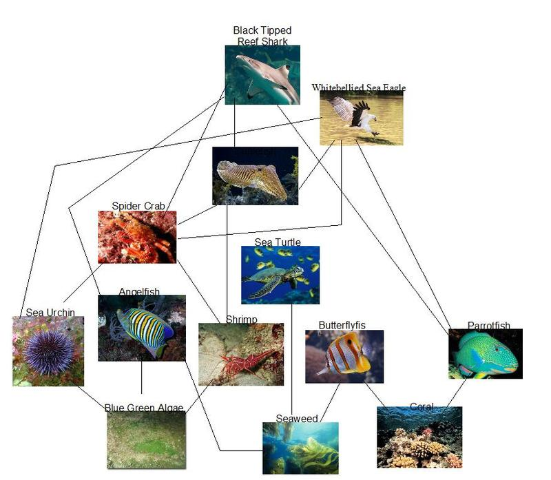 coral reef food chain diagram best wiring software the internet s web great barrier