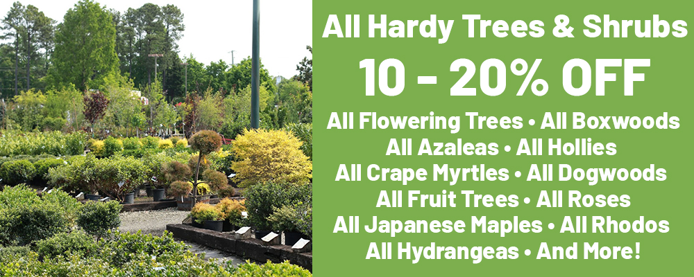 All Trees and Shrubs 10 - 20% OFF All Flowering Trees All Boxwoods All Azaleas All Hollies All Crape Myrtles All Dogwoods All Fruit Trees All Roses All Japanese Maples All Rhodos All Hydrangeas And More!